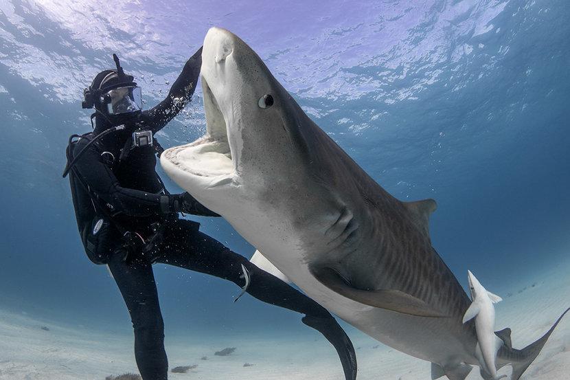 Shark week, Sharks